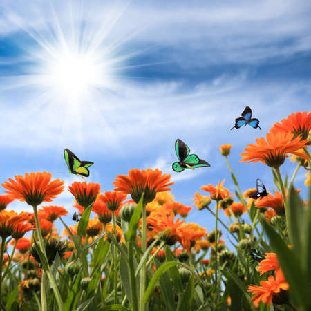 yellow daisy with butterflies against a blue sky Stock Photo - 14673456