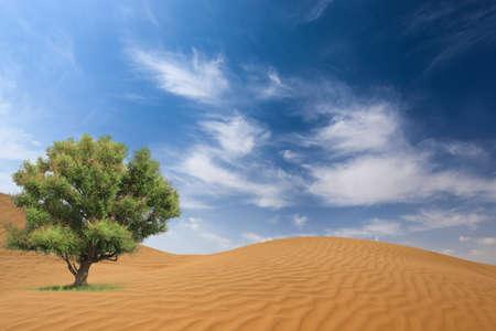 gobi desert and a green big tree against a blue sky photo