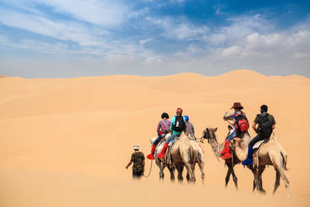 gobi desert: camel caravan going through the desert,inner mongolia,China