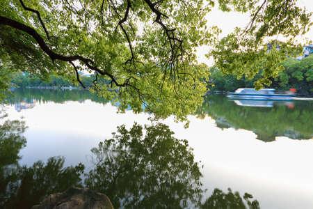 banyan tree: big camphor tree and beautiful banyan lake in guilin,China