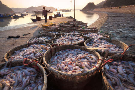 fishery: fresh seafood from the fishery harbor in morning,China
