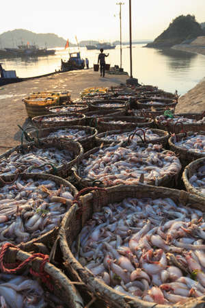 fishery: fresh seafood at fishery harbor in the morning