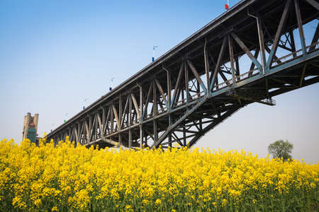 yangtze: yangtze river bridge and rapeseed flower in spring