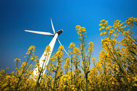 wind power plant: a big wind turbine in rapeseed field with a clear sky