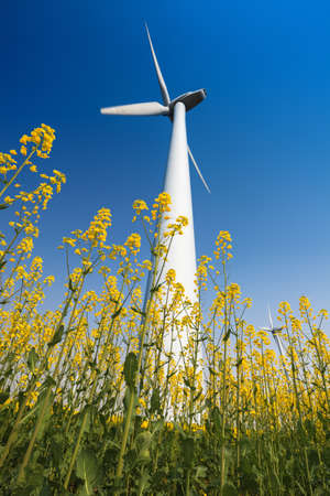 wind turbines in rapeseed field with a clear sky photo