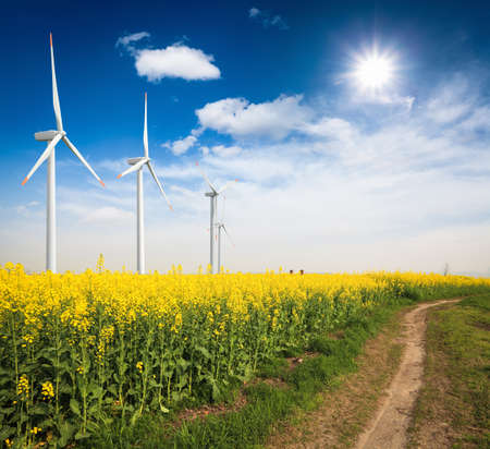 Rapsfeld mit Windrädern vor einem blauen Himmel, grüne Energie Hintergrund Standard-Bild
