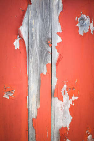 closeup of the peeling paint on aging wooden door photo
