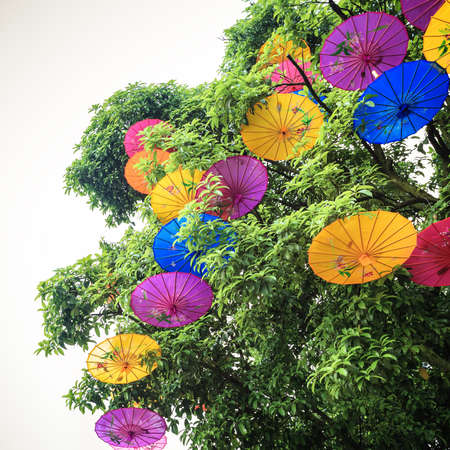 oiled: colorful oiled paper umbrella hung in a tree Stock Photo