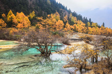 calcification: calcification ponds in autumn forest,huanglong scenic and historic interest area , sichuan , China .