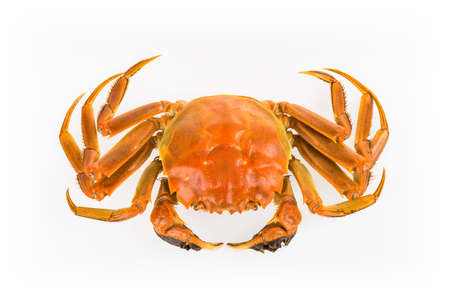 cooked whole crab isolated on white background  photo
