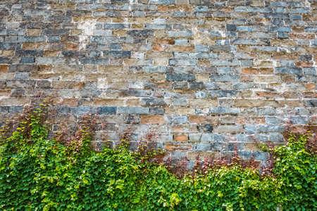 ツタが古代都市の城壁に登った 写真素材