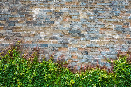 climbed: the ivy has climbed up the ancient city wall Stock Photo