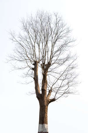 bare tree: isolated tree in the winter, bare branches