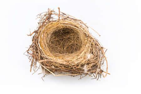 nido de pajaros: nido de pájaro natural aislado en fondo blanco
