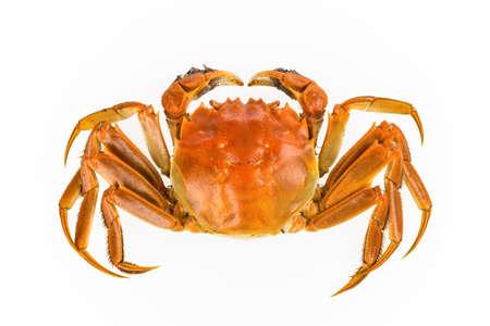 cangrejo: delicioso cangrejo de agua dulce sobre fondo blanco