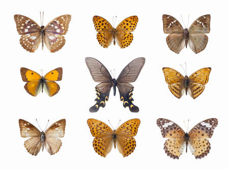 spot the difference: nine beautiful butterfly isolated on white