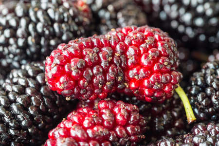 closeup of the freshness mulberry fruit in summertime