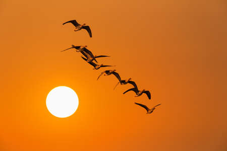 the wild geese in sunset,season changes concept