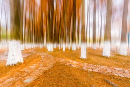metasequoia woods in winter park landscape Stock Photo