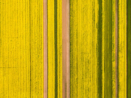 a birds eye view of rapeseed flower field, spring landscape of natural texture background