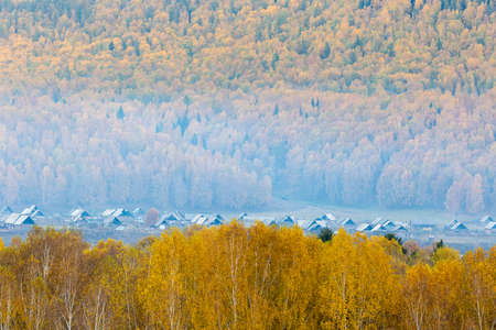 beautiful villages in the forest in autumn, xinjiang, China