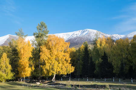 the natural beauty of autumn, Kanas scenic area in xinjiang