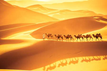 la squadra di cammelli marcia sulle dune di sabbia, il paesaggio del deserto dorato al tramonto