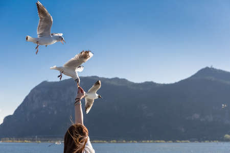 feeding seagulls in dianchi lake, kunming, yunnan, China