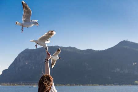 karmienie mew w jeziorze dianchi, kunming, yunnan, Chiny