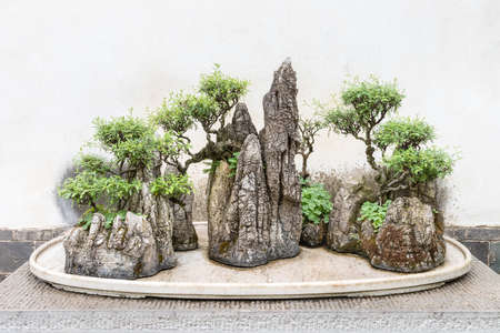 old bonsai trees on rockeries, traditional Chinese gardening landscape