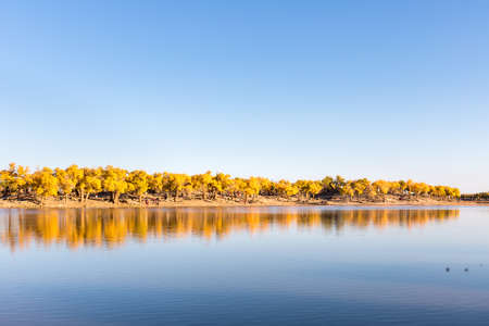 autumn landscape of populus euphratica forest in ejina, alxa league, inner mongolia, China Imagens
