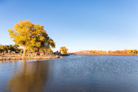 ejina landscape in autumn, inner mongolia, China