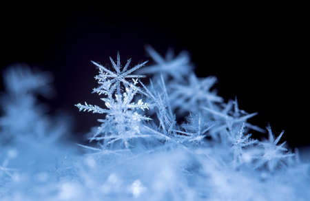 natural snowflakes on snow, photo real snowflakes during a snowfall, under natural conditions at low temperature Stock Photo
