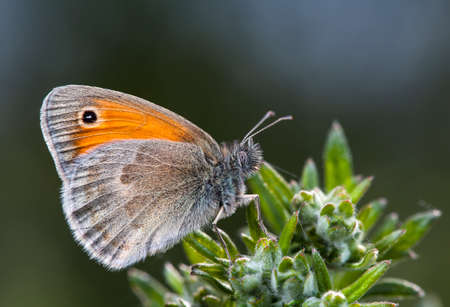 butterfly, a picture of it is made in the field, in a native habitat
