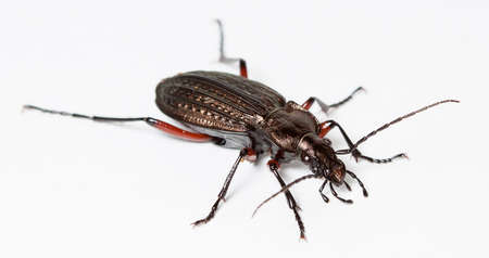 ground bug Stock Photo