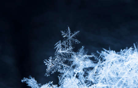 natural snowflakes on snow. the picture is made at a temperature of -10 C