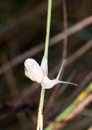 Snail on the grass