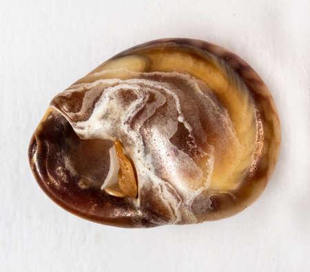 Sea shell closeup shot isolated on white