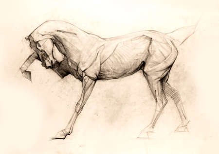 Pencil drawing, sketch Stock Photo