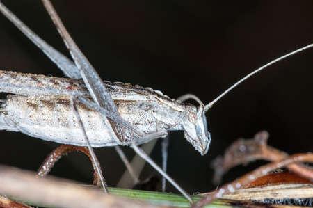 Live grasshopper in closeup shot Stock Photo