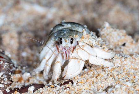 small hermit crab on the beach Stok Fotoğraf