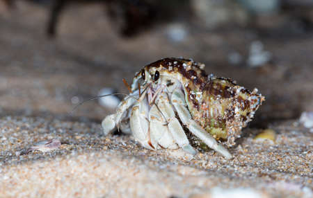 hermit crab on the beach Stockfoto