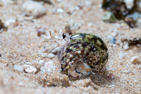 hermit crab on the beach Imagens