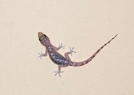 small gecko on the wall