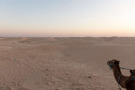dawn in the Sahara desert