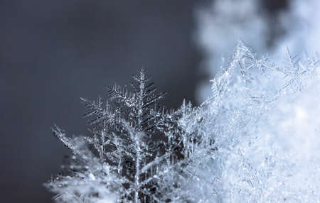 winter photo of snowflakes in the snow
