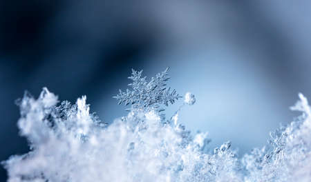 snowflake in the snow, winter