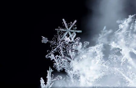 natural snowflakes on snow, winter Stockfoto