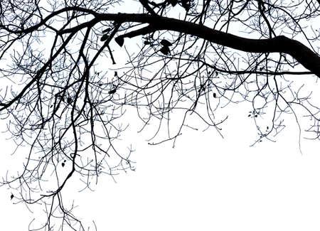 tree: Dry tree