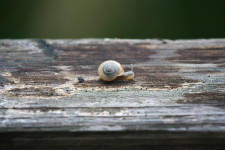 snails: Snails Stock Photo